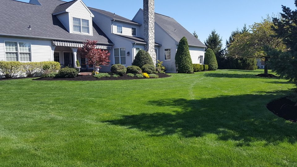 Lawn and Shrubs