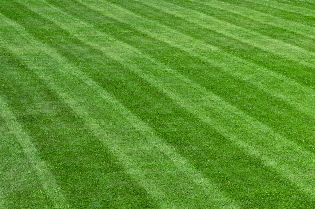 mowed-grass-stripes